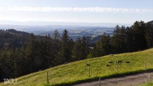 Alpage de la Neuve, Blonay
