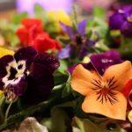 macro-fleurs-1024x576